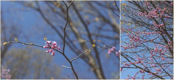 harrisonburg springtime