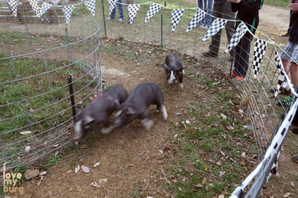 Back home on the farm pig race 3
