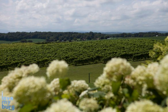 Fragrance at Barren Ridge Vineyard, Fishersville